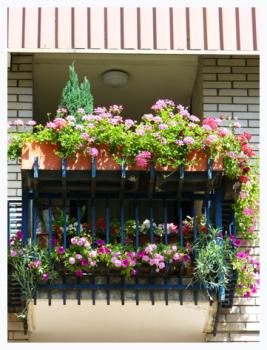 Cvijeće na balkonu